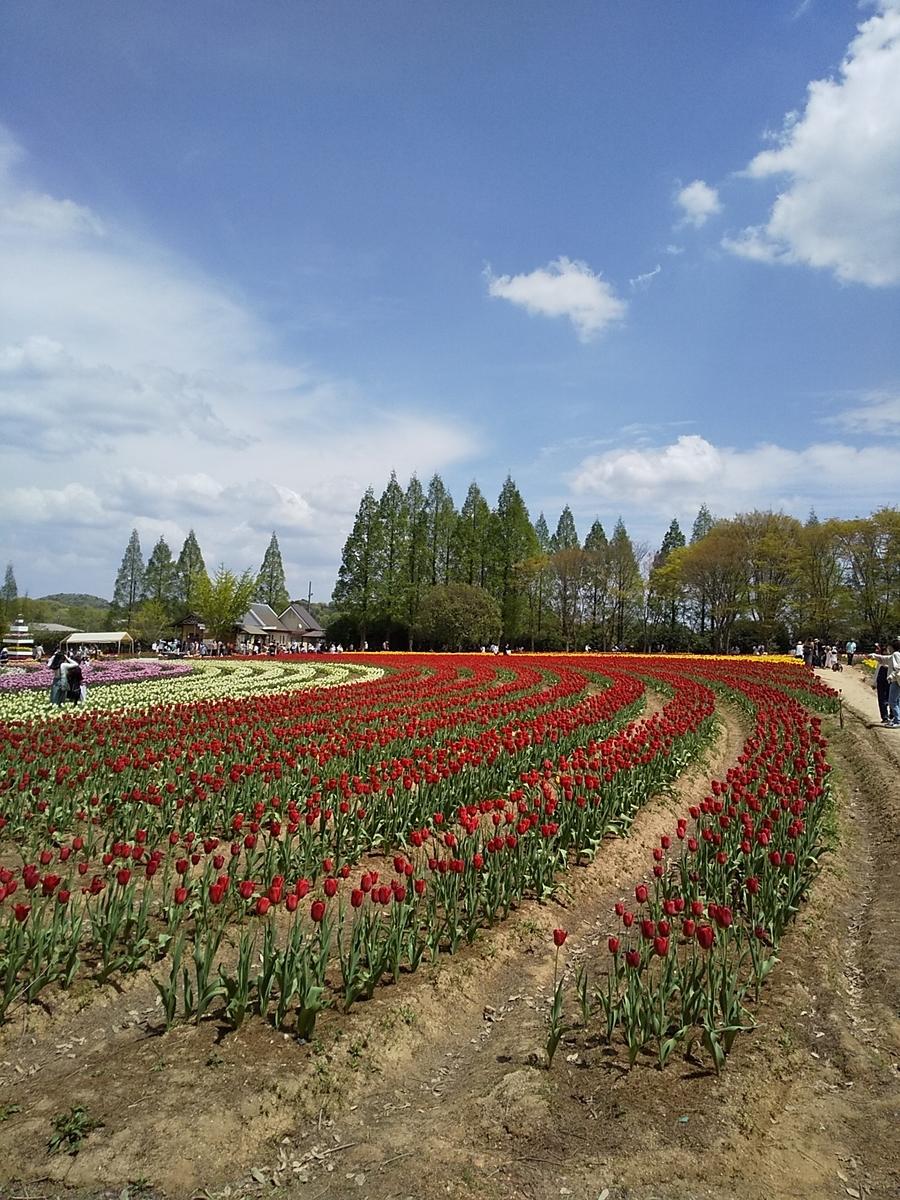 f:id:yuzuhana-785:20210424212632j:plain