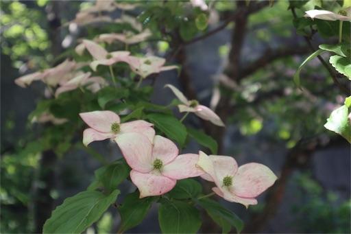 f:id:yuzuka-tani:20180717160749j:image