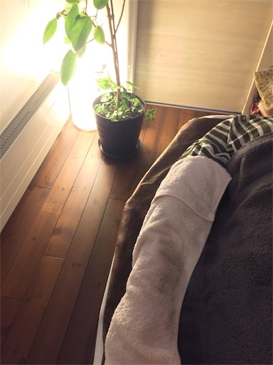 f:id:yuzuka-tani:20200731093224j:image