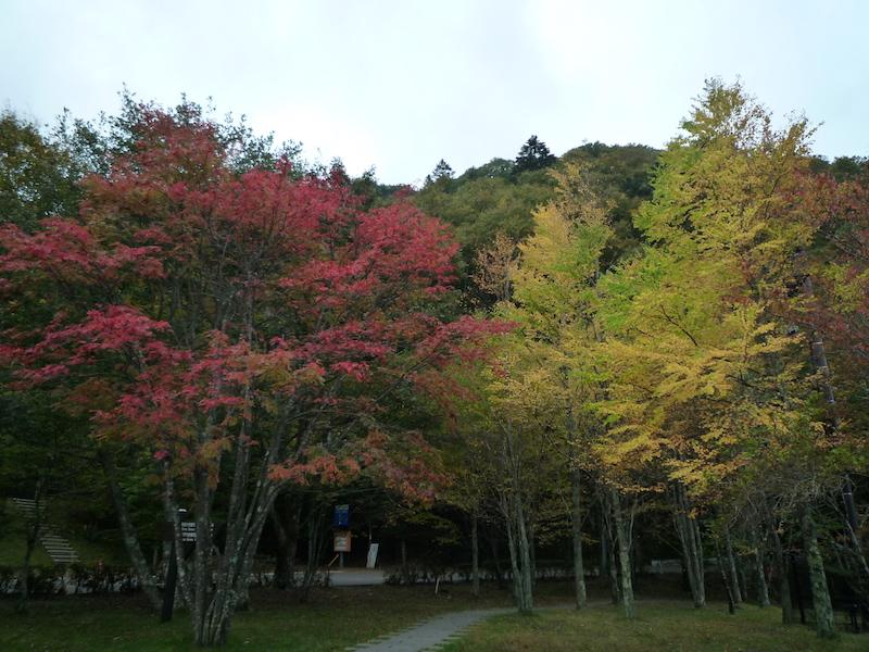 f:id:yuzuki-miki:20181006234742j:plain