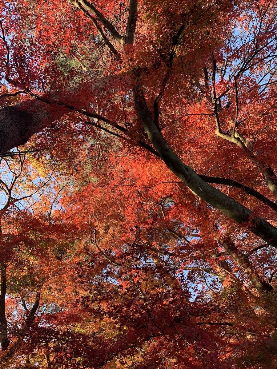 f:id:yuzuki-miki:20201121221806j:plain