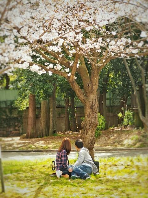 f:id:yuzuki-seraby:20170315213043j:image