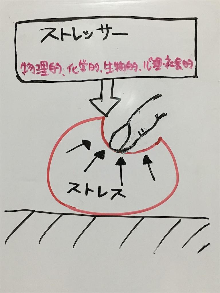 f:id:yuzuki-shimizu:20180909203636j:image