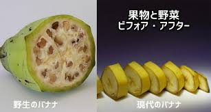 f:id:yuzuki-shimizu:20190320114707j:plain