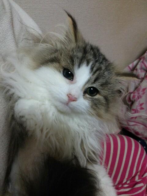 f:id:yuzukichi819:20170116011736j:image