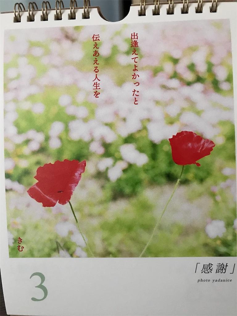 f:id:yuzunohana:20191203153954j:image
