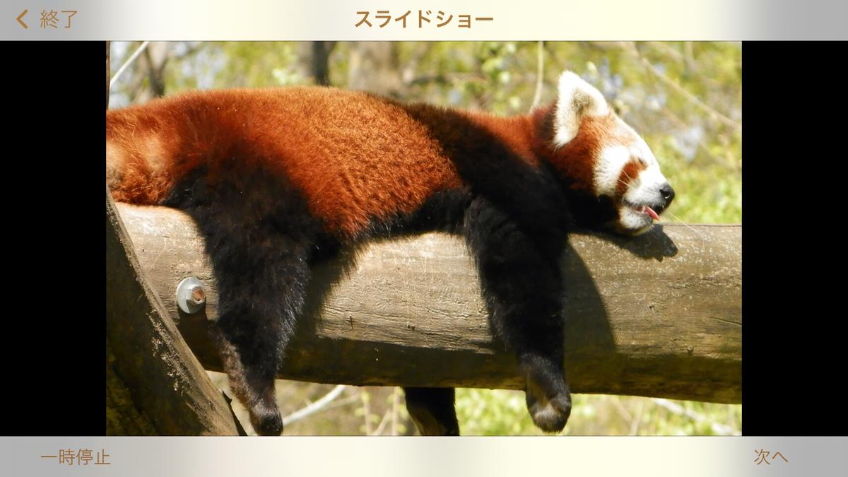 f:id:yuzurifa:20210217105822p:plain