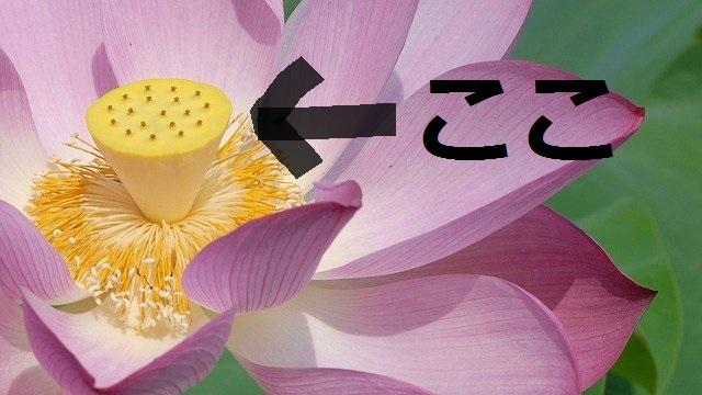 f:id:yuzuriha0620:20200712222419j:plain