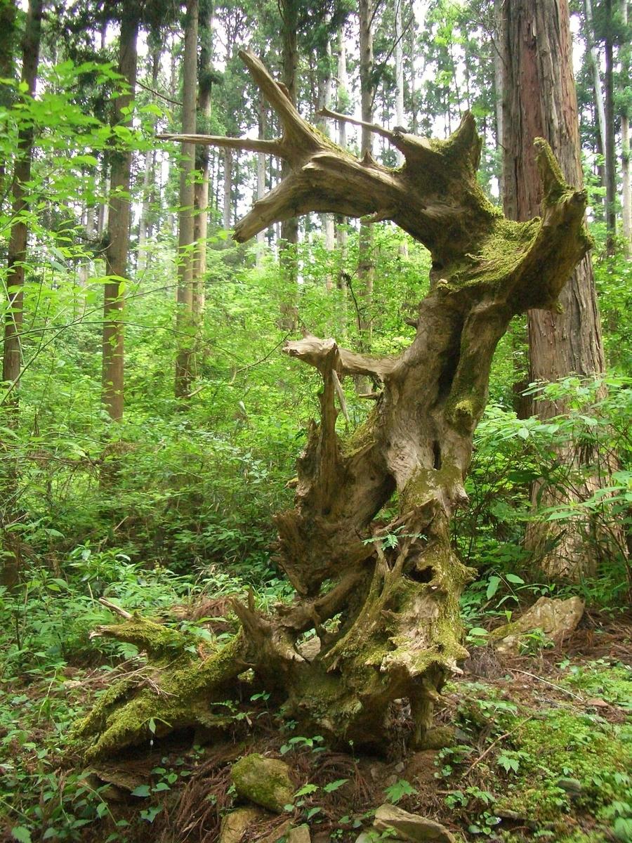 御岩神社の参道の木