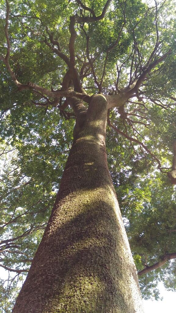 馬橋稲荷神社 境内社の木