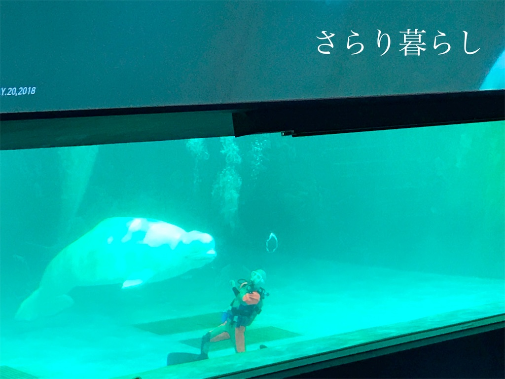 f:id:yuzushiohamachi:20180522004032j:image