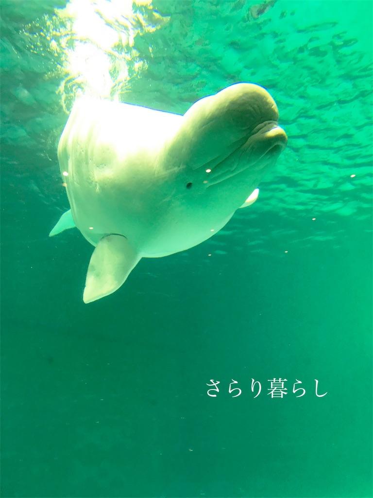 f:id:yuzushiohamachi:20180522010436j:image