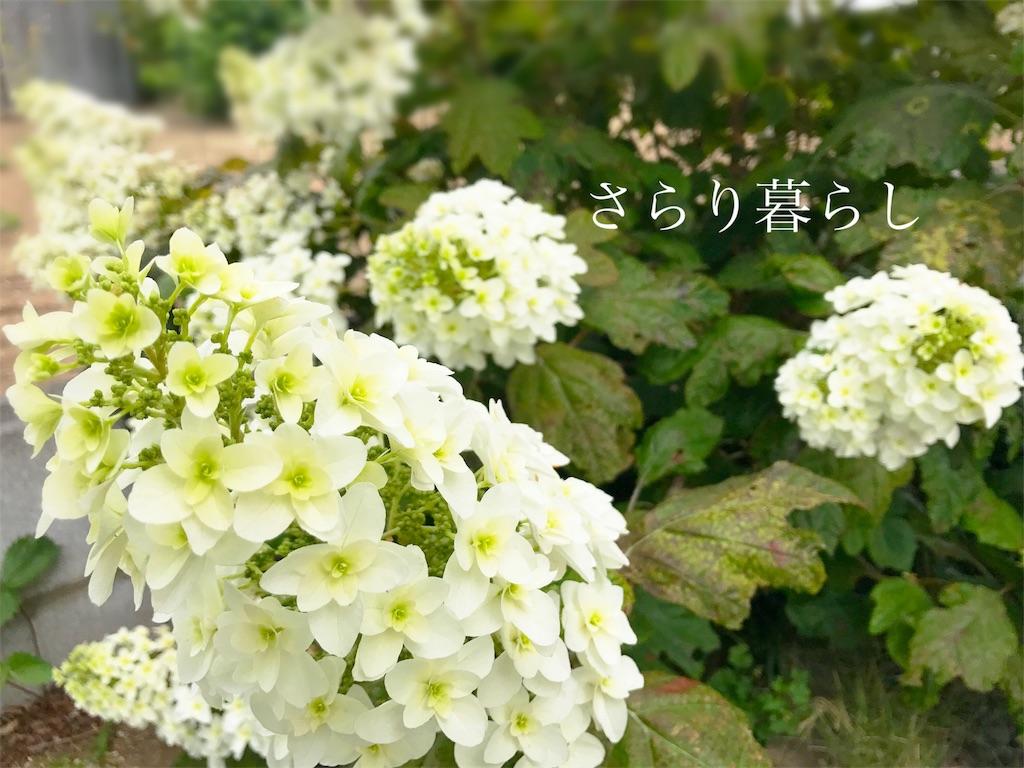 f:id:yuzushiohamachi:20180529085424j:image