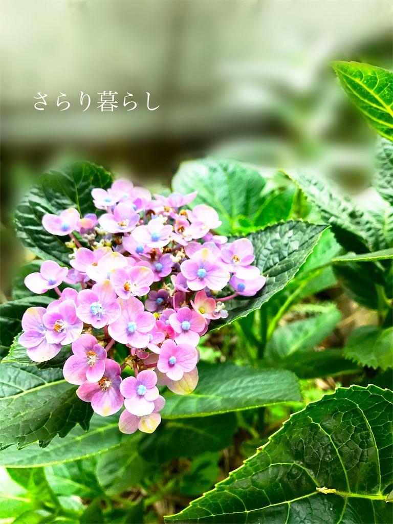 f:id:yuzushiohamachi:20180711214813j:image