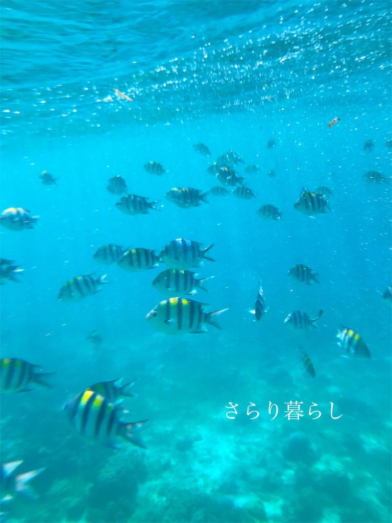 f:id:yuzushiohamachi:20190415200134j:image