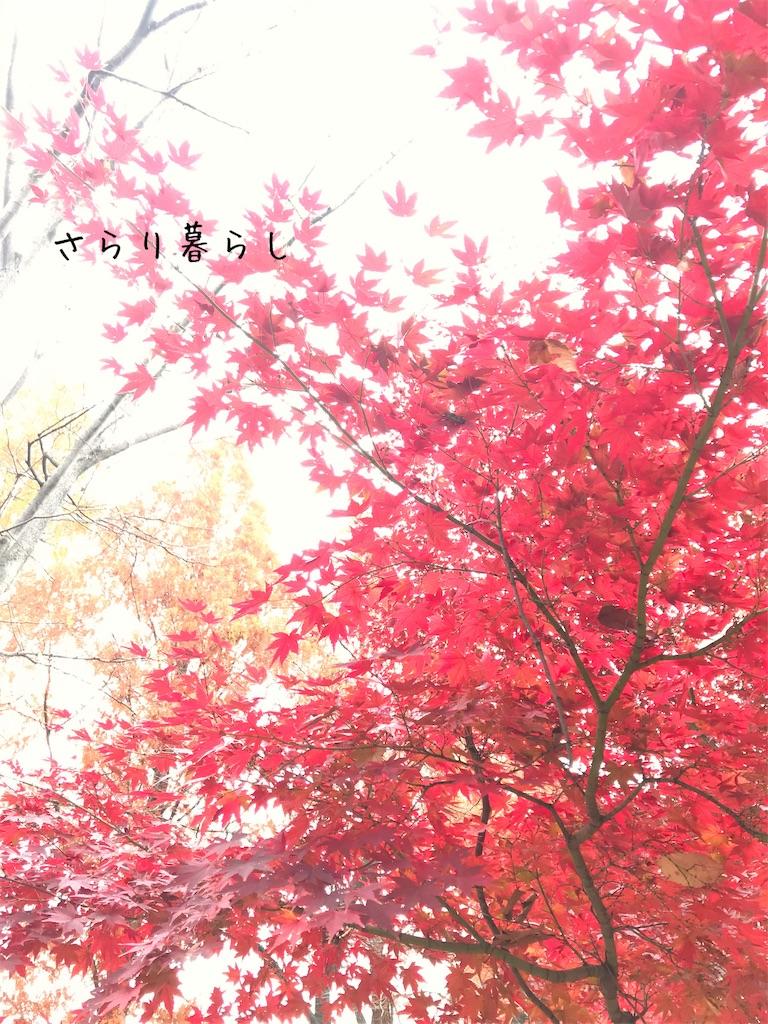 f:id:yuzushiohamachi:20201206080342j:image