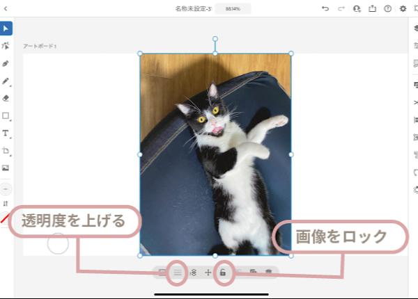 うちの猫さんの写真