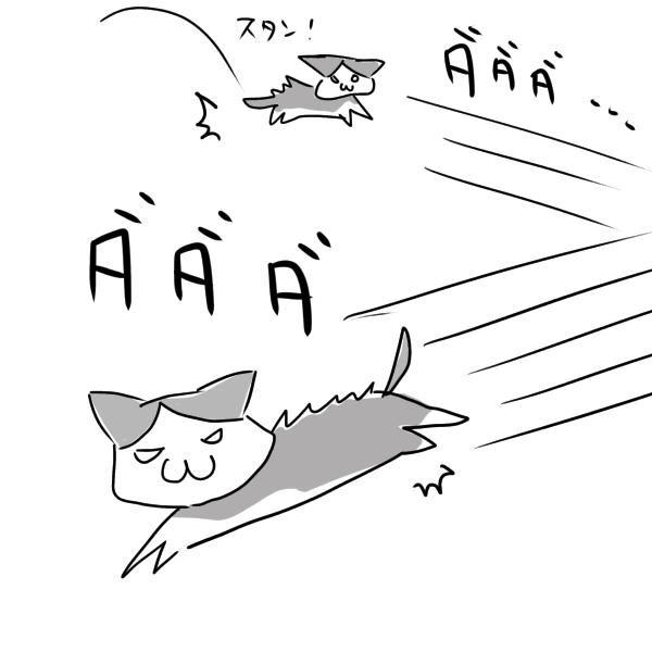 猫が爆走するイラスト