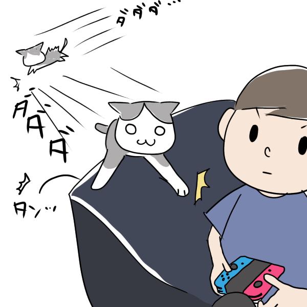 人がいるところもお構いなしに駆け抜ける猫