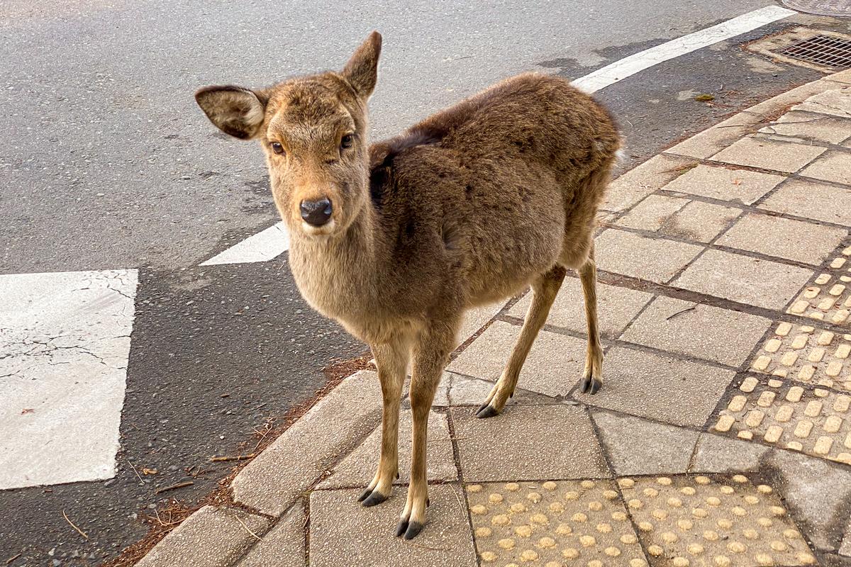 f:id:yuzutaso_san:20210106222323j:plain