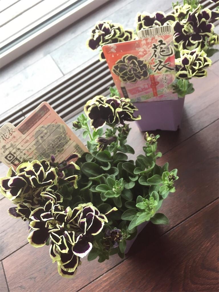 f:id:yuzuwasabi:20180605144806j:image