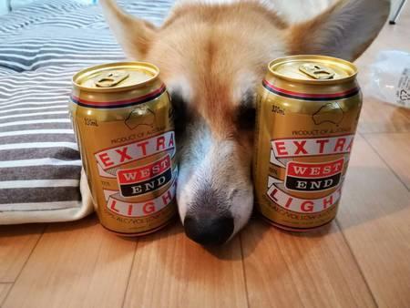 ローアルコールビールに挟まれるコーギー