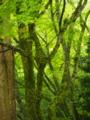 『京都新聞写真コンテスト 新緑の高尾』