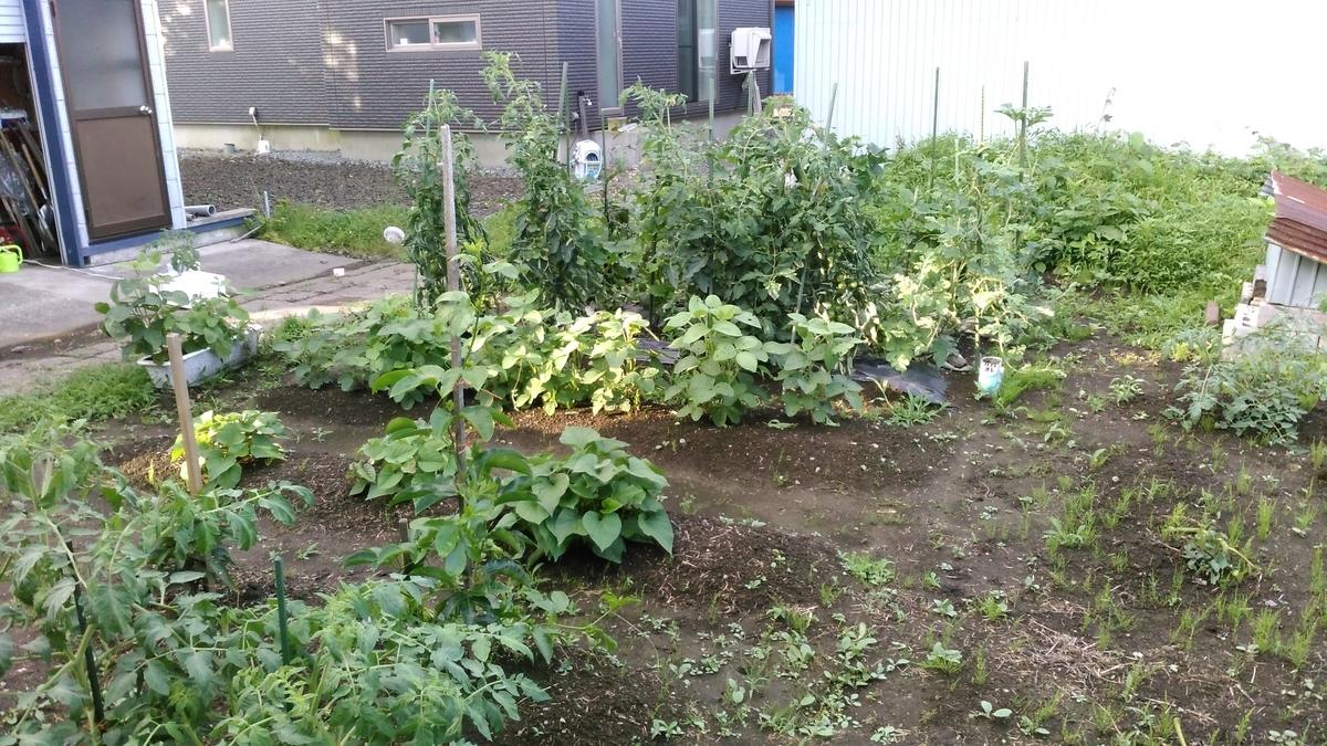 1年目春~夏の家庭菜園の状況