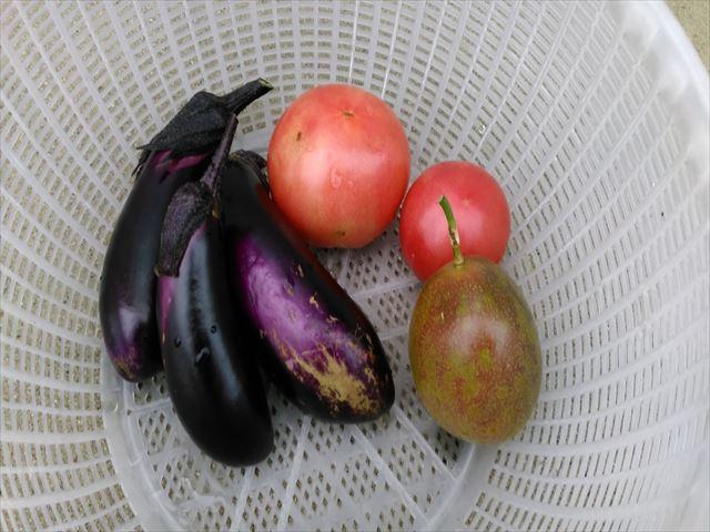 1年目夏野菜収穫状況