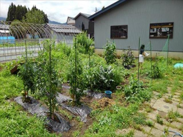 家庭菜園2年目家の庭7月の写真
