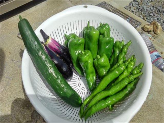 家庭菜園2年目家の庭夏野菜収穫の写真