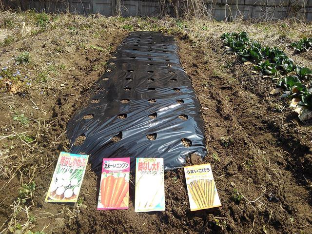 春まき根菜4種植付けの写真