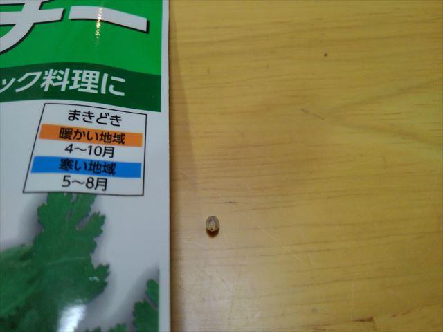 パクチーの種(殻割り後)