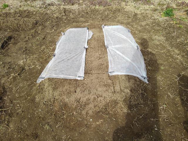 超密植ミニ菜園(その1)不織布かけ