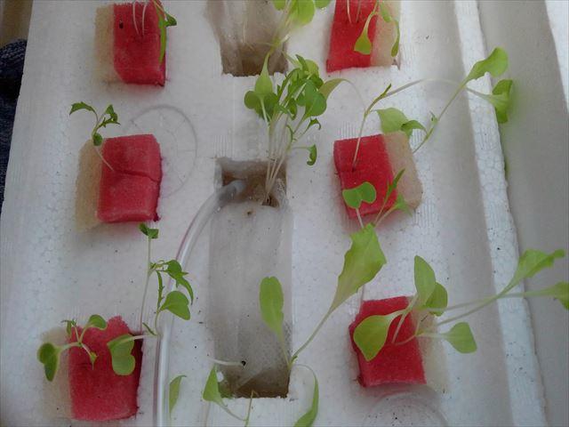 水耕栽培試作品にエアレーション
