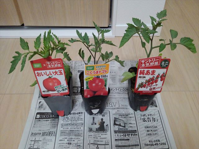 購入したトマトの苗