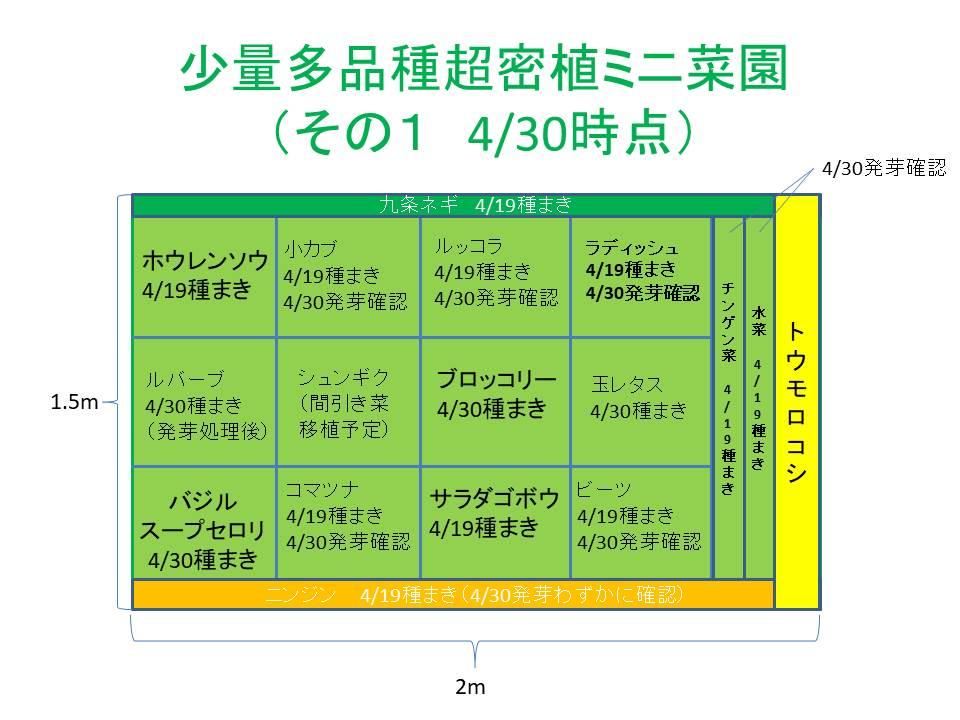 超密植ミニ菜園(その1)4/30時点