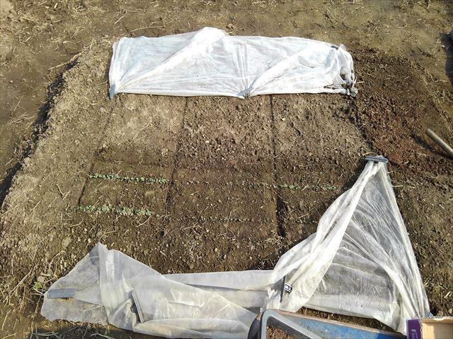 超密植ミニ菜園発芽確認