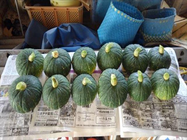 去年収穫したミニカボチャ