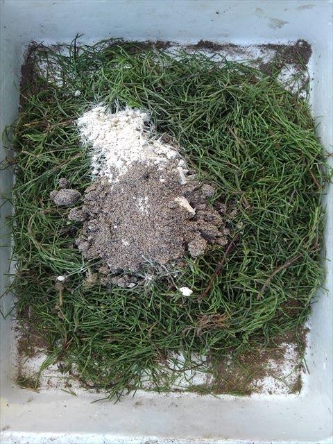 スギナ入りぼかし肥の材料準備完了!