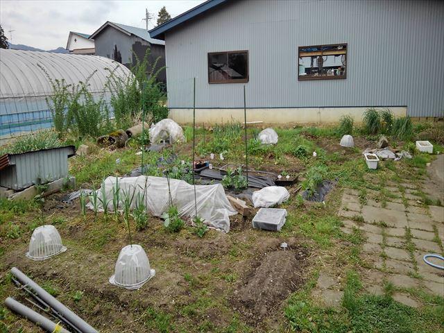 家庭菜園(家の庭)
