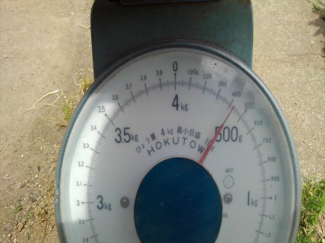 通常栽培試し掘り1回目の重量測定結果