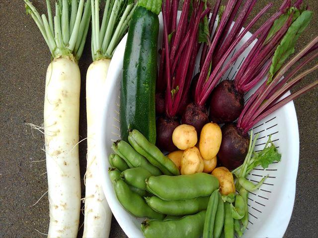 収穫したビーツと野菜たち