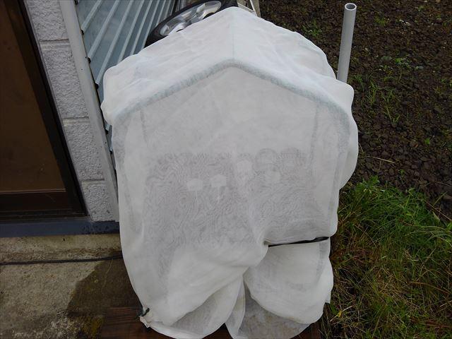 ミニビニールハウスを寒冷紗で囲って育苗