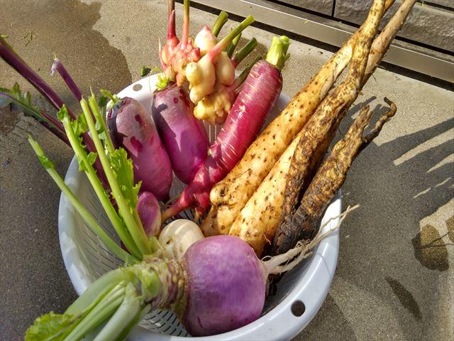 家庭菜園後半の収穫