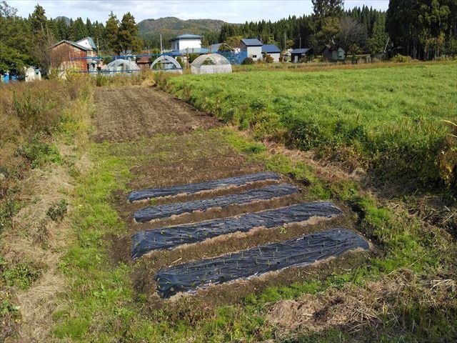 よっしー農園第二農場