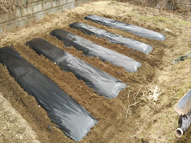 ジャガイモの植え付け1回目完了