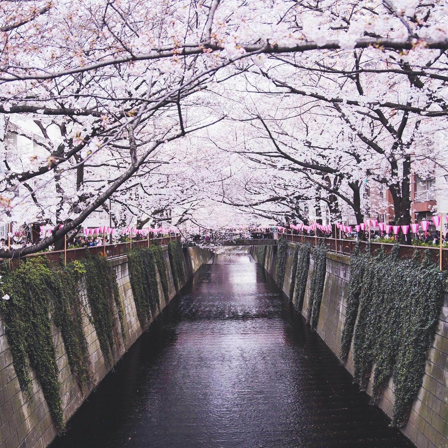 f:id:yyusukekun:20180325231229j:image