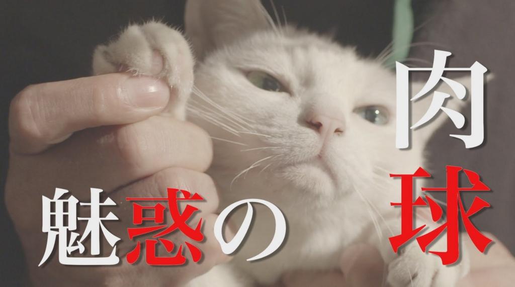 f:id:z2kawasaki03080116:20170318174845j:plain