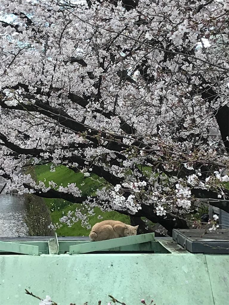 f:id:zaihamizunogotoshi:20190401053738j:image